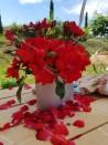 Rosier buisson création Millard de Martigny ®