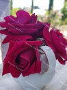 Shrub rose Louis Van Houtte