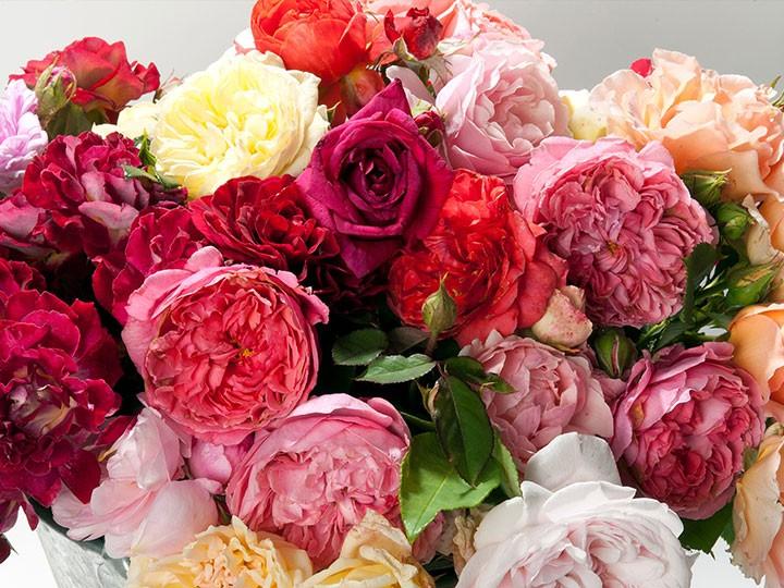 Nos rosiers Créations & Exclusivités