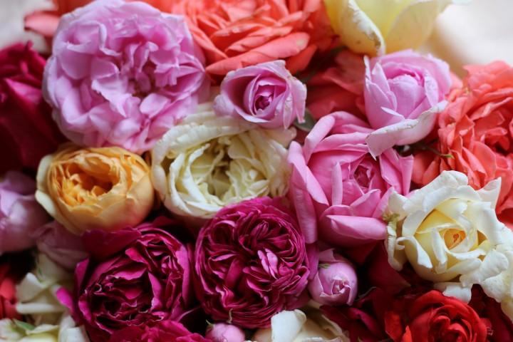 Coffrets découverte rosiers